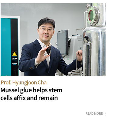 Prof.Hyungjoon,Cha - Mussel glue helps stem cells affix and remain - READ MORE