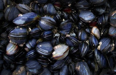 Mussel bioadhesive inspired surgical protein glue: Future of scarless skin regeneration