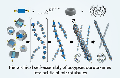 POSTECH Developed Self-Assembled Artificial Microtubule Like LEGO Building Blocks