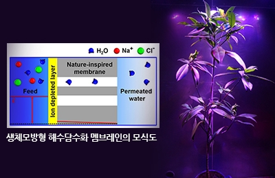 기계 이상준 교수 연구팀, 바다식물 '맹그로브' 뿌리 모방한 해수담수화 기술 개발