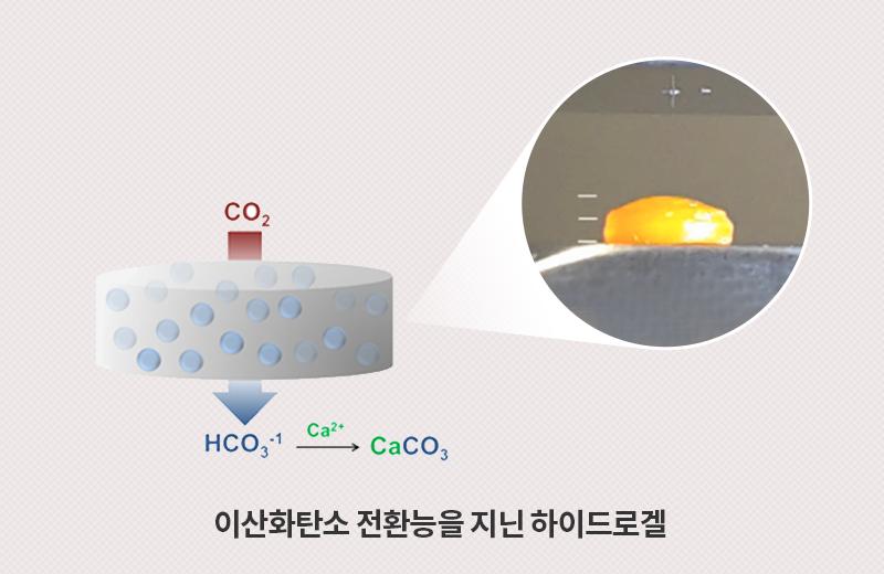 이산화탄소 전환능을 지닌 하이드로겔
