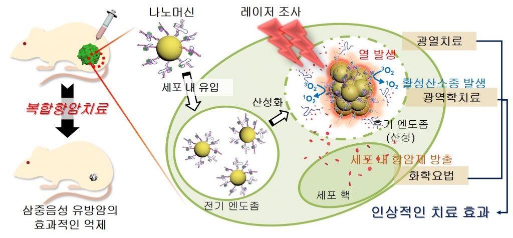 복합항암치료-삼중음성 유방암의 효과적인 억제-나노머신-세표 내 유입-전기 엔도좀-산성화-레이져 조사-열 발생-활성산소종 발생-후기 엔도봄(산성)-세포 내 항암제 방출-세포핵-광열치료-광역학치료-화학요법-인상적인 치료 효과