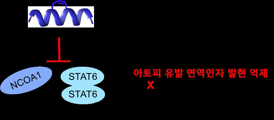 단백질 상호작용 저해제 NCOA1 STAT6 STAT6 아토피 유발 면역인자 발현 억제