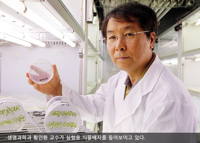 생명과학과 황인환 교수가 실험용 식물베지를 들어보이고 있다.