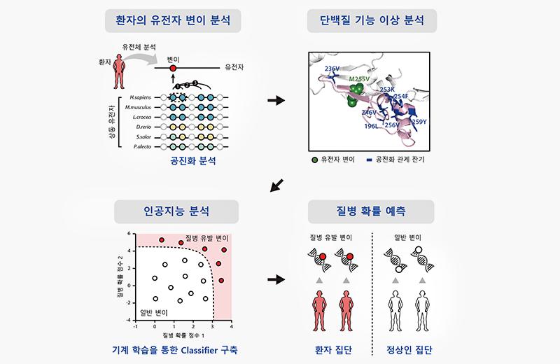 연구팀은 단백질 서열의 공진화 정보(co-evolution)*1를 이용한 분자진화 분석과 기계학습을 이용한 인공지능 기술을 바탕으로 유전자 변이로부터 질병 확률을 예측 가능한 생물정보학 기술을 개발하였고 설명이미지이다.